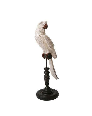 Ornithology Avairy Parrot Blanc