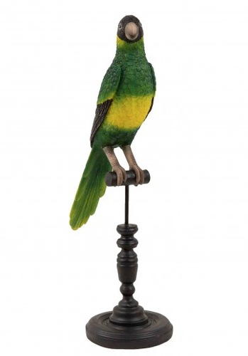 Este Conure Bird-Creatively Active Minds-Bristle by Melissa Simmonds