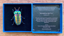 Load image into Gallery viewer, Trovelore Rainbow Beetle Brooch
