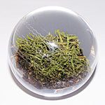 LORD'S GENUINE TURF GLASS PAPERWEIGHT
