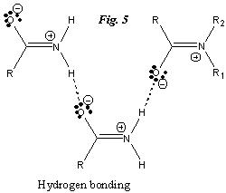 Intermolecular forces between resonance structures of amide