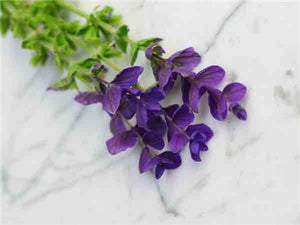 Blue Monday Sage Salvia