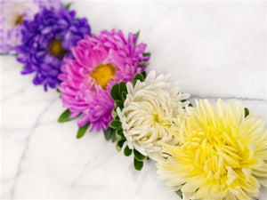Giant Perfection Mix Asters