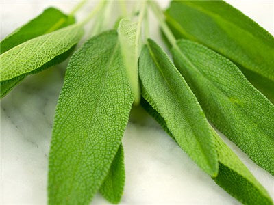 Sage - Broad Leaf