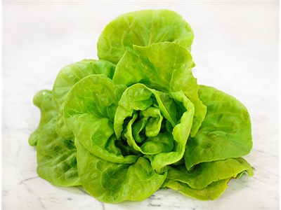 Butter King Lettuce