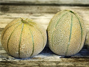 Eden's Gem (Rocky Ford Green-Fleshed) Melon