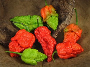 Apocalypse Scorpion Hot Pepper