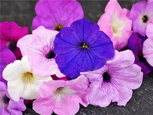 Balcony Mix Petunia