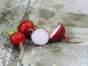 Early Scarlet Globe Radish