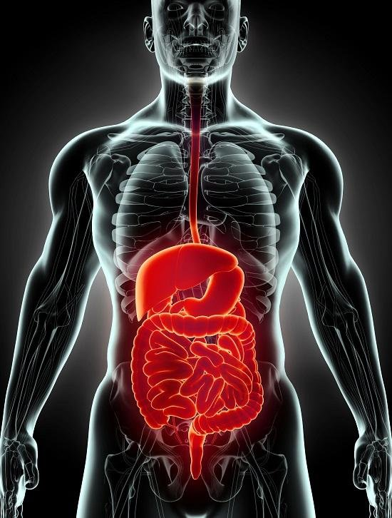 A Case for Digestive Enzymes | Earthly Nutrition