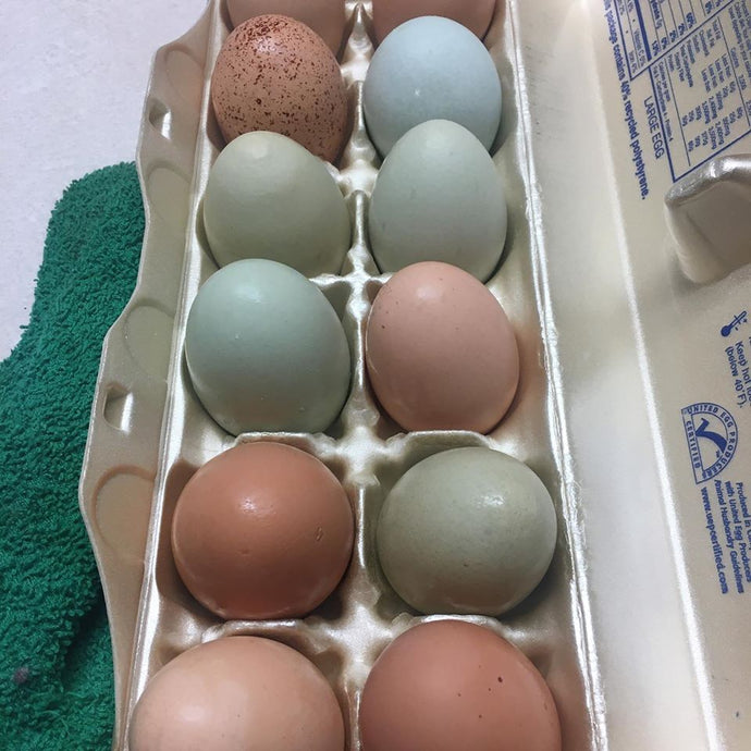 1 Dozen Chicken Eggs