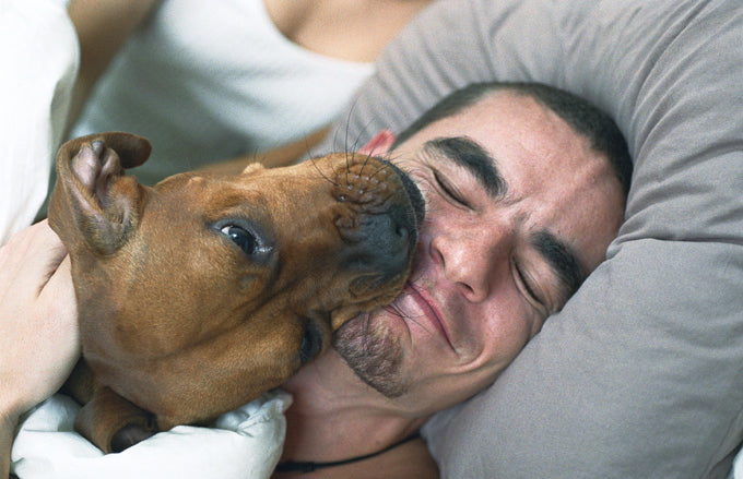 5 Signs Your Dog Dad is a Keeper