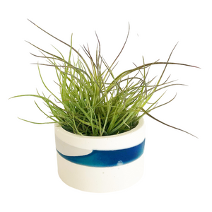Round Pottery with Air Plant