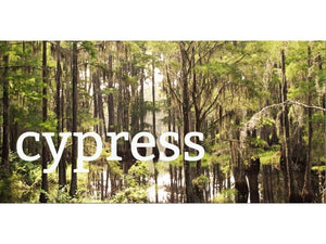 Ingredient Spotlight: Cypress Essential Oil