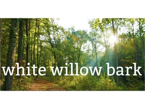 Ingredient Spotlight: White Willow Bark