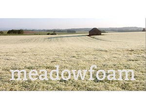 Ingredient Spotlight: Meadowfoam Seed Oil