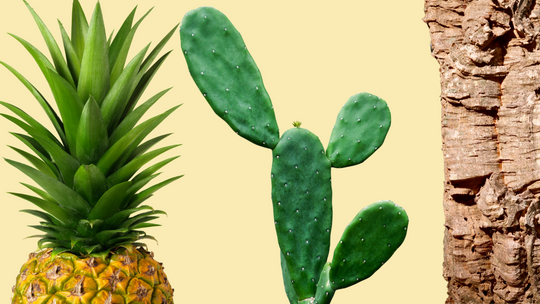 What do pineapple, cactus and cork have in common? it's logic and the commitment to natural materials