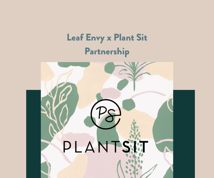 Leaf Envy x Plant Sit: Plant Installations + Maintenance