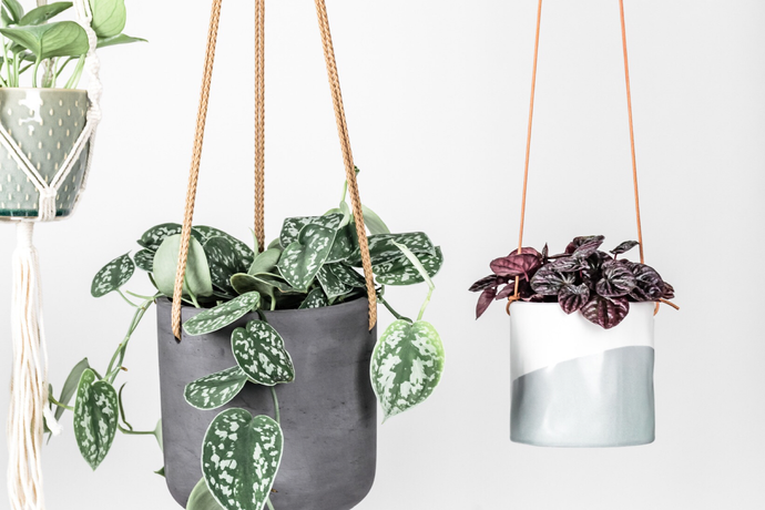 Top Tips: How To Choose A Decorative Pot For Your Plant