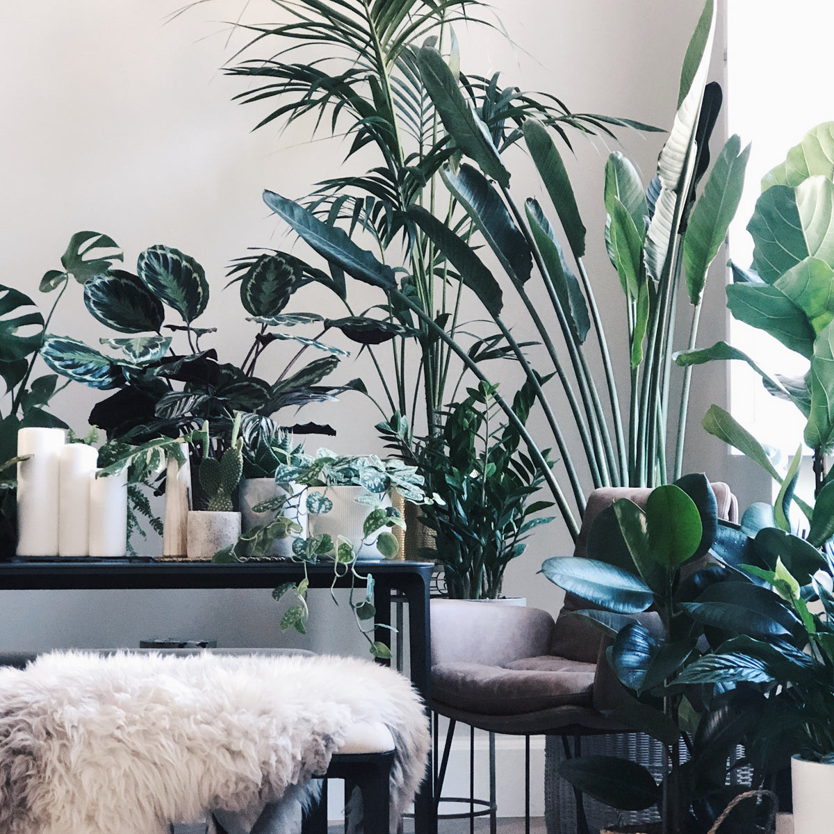 Grow your indoor jungle