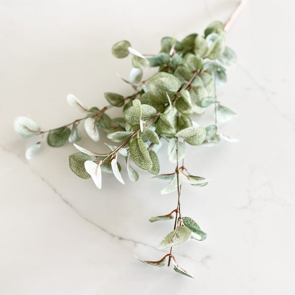 Garden eucalyptus, available in two sizes!
