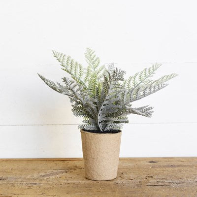 Paper potted fern, 10""