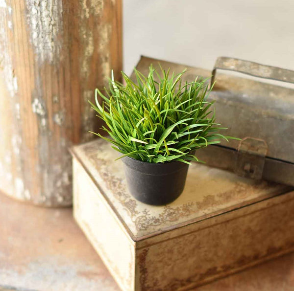 "4.25"" Potted Herb"