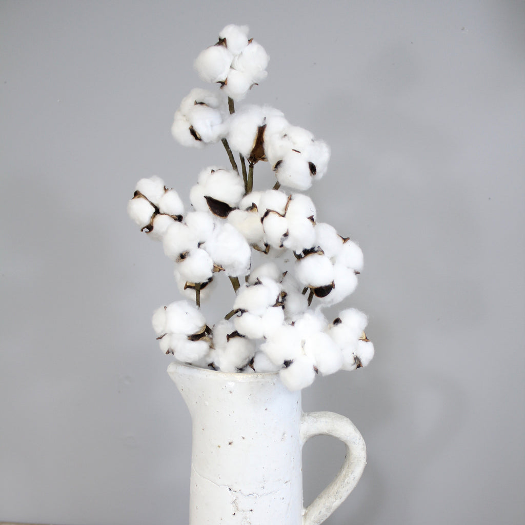 The pefect cotton stem