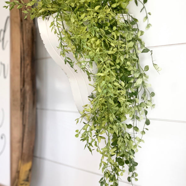 Hanging Boxwood, 34""