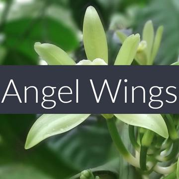 Fragrance Oil Angel Wings 10ml-Other Body Care, Home Fragrance-Essential Oils-Ella's Keeping Company