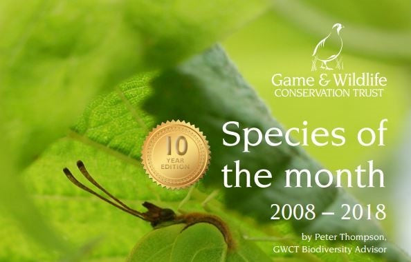 New eBook celebrates wildlife project's 10th anniversary