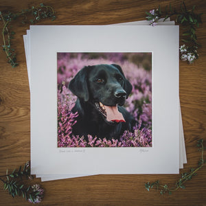 'Black Lab in Heather II' - Gundog Photographic Print by Rachel Foster