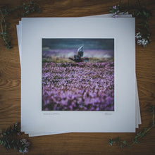 Load image into Gallery viewer, 'Above the Heather' - Grouse Photographic Print by Rachel Foster