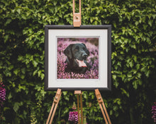 Load image into Gallery viewer, 'Black Lab in Heather II' - Gundog Photographic Print by Rachel Foster