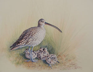 'Curlew' - Print by Owen Williams