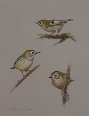 Goldcrest by Ashley Boon