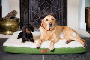 The Red Dog Company & GWCT Dog mat