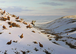 Grouse in the Snow by Rodger McPhail