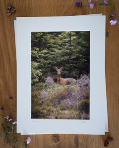 Roe Doe - Photographic Print by Rachel Foster