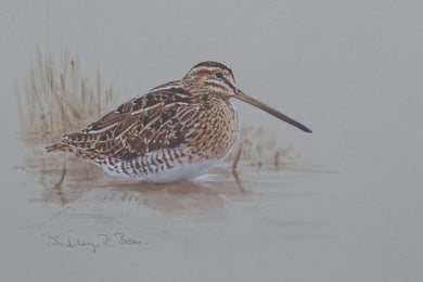 Snipe by Ashley Boon - Pack of 10 Christmas Cards