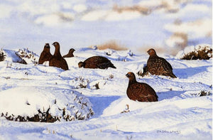 Snowbound Grouse by Jason Lowes