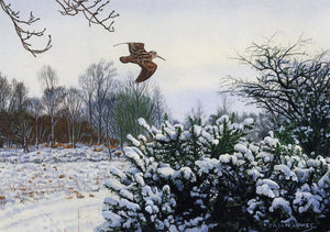 Woodcock over Gorse by Jason Lowes