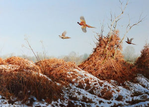 Late Season Pheasants by Rodger McPhail