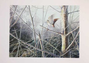 Limited Edition Signed Print 'Flushed Woodcock'