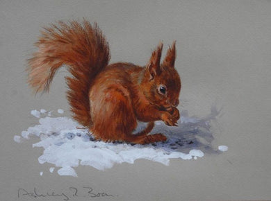 Red Squirrel in Snow by Ashley Boon