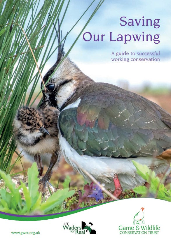 Saving Our Lapwing