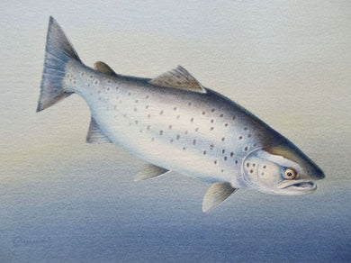 Sea Trout print by Owen Williams