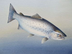 Sea Trout print by by Owen Williams