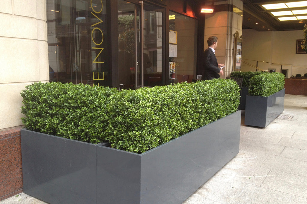 The Westbury Hotel - Artificial Boxwood Hedging - Trees Company