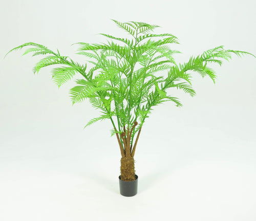 Alsophila Palm Tree